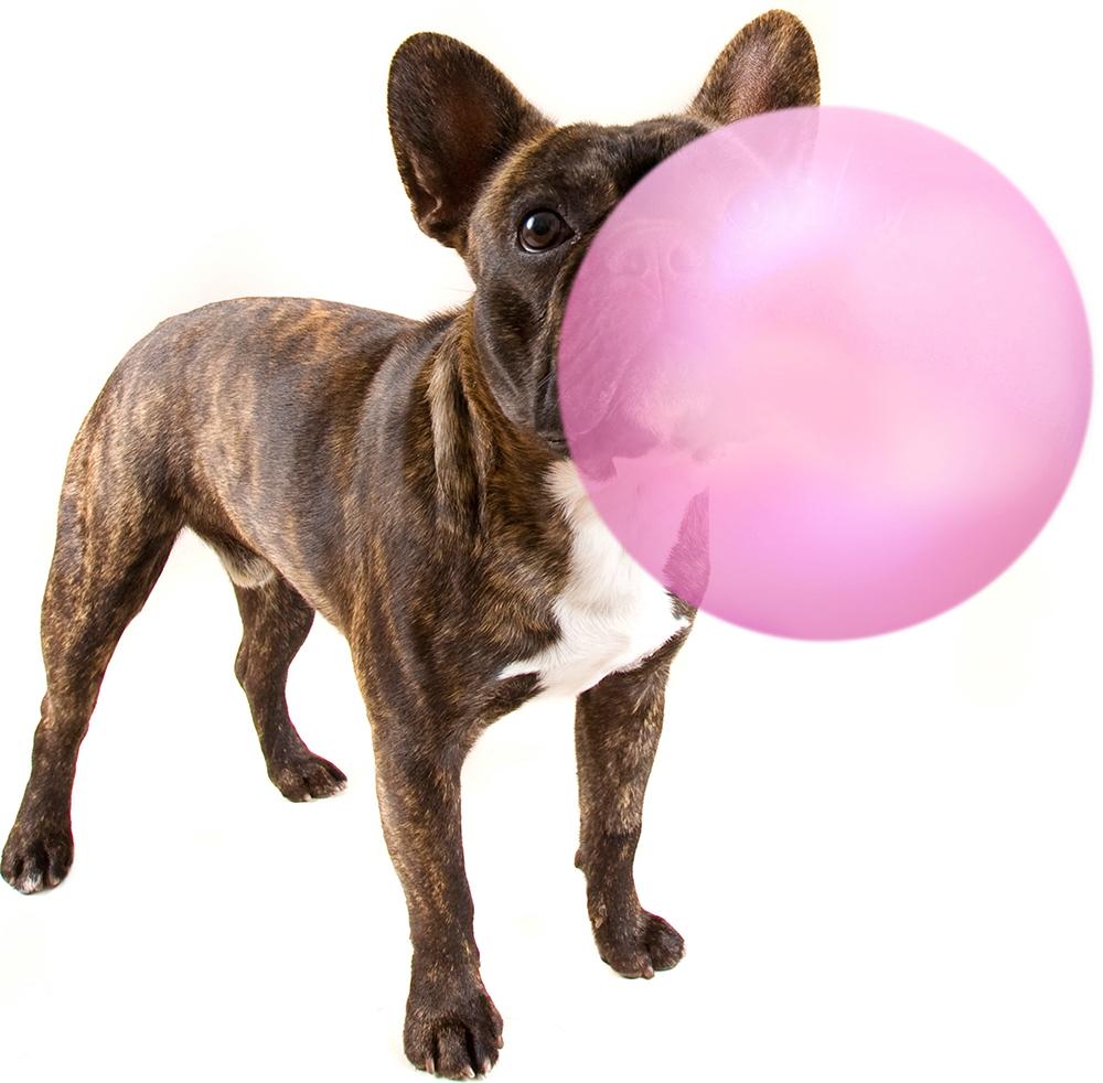 Dog & balloon